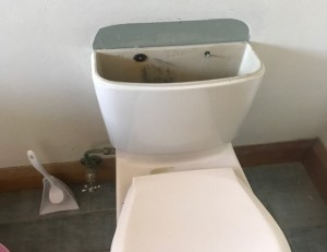 Leaking Toilet in Five Dock